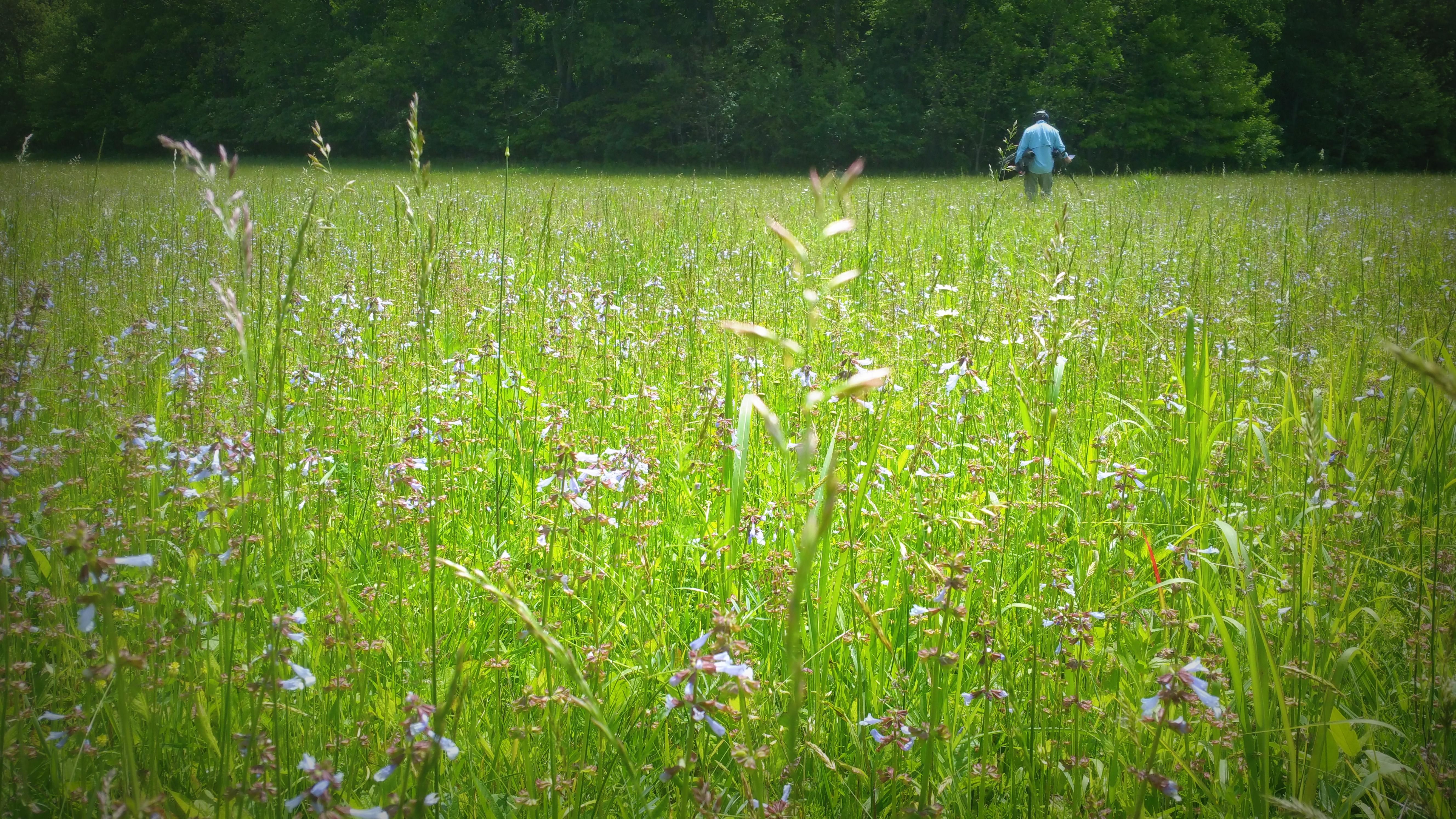 Civil War Union Campsite in a grass pasture - Kentucky