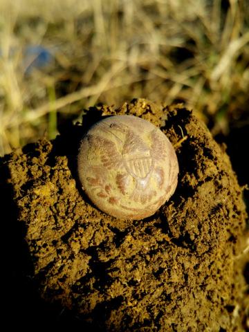 General Infantry Union Civil War Button As Dug - Kentucky